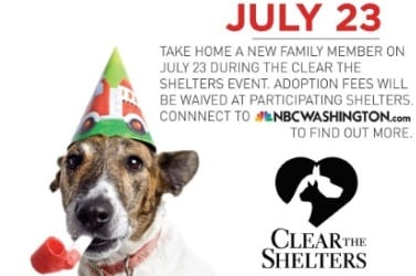 Clear the Shelters Thumb 1