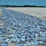 MDE: 6,000 dead fish found in Gunpowder, Bird Rivers